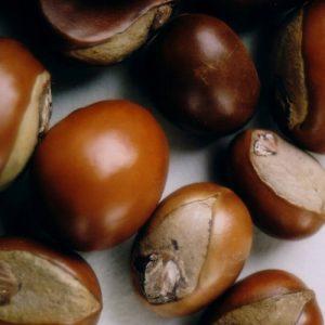 Ши (карите) масло нерафинированное, 100 гр.