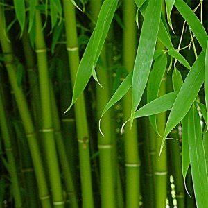 Бамбуковое молочко