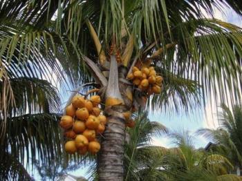 Пальмовое масло рафинированное, 100 гр.