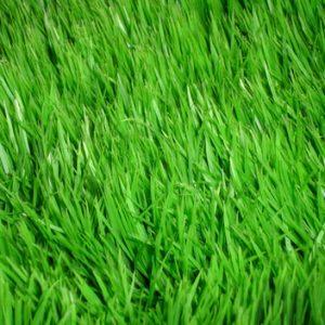 Свежесть зелени